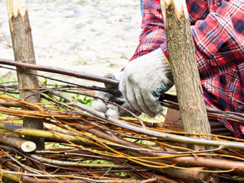 Country skills hedge laying