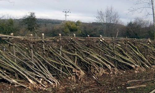 Country skills hedgelaying Worcester
